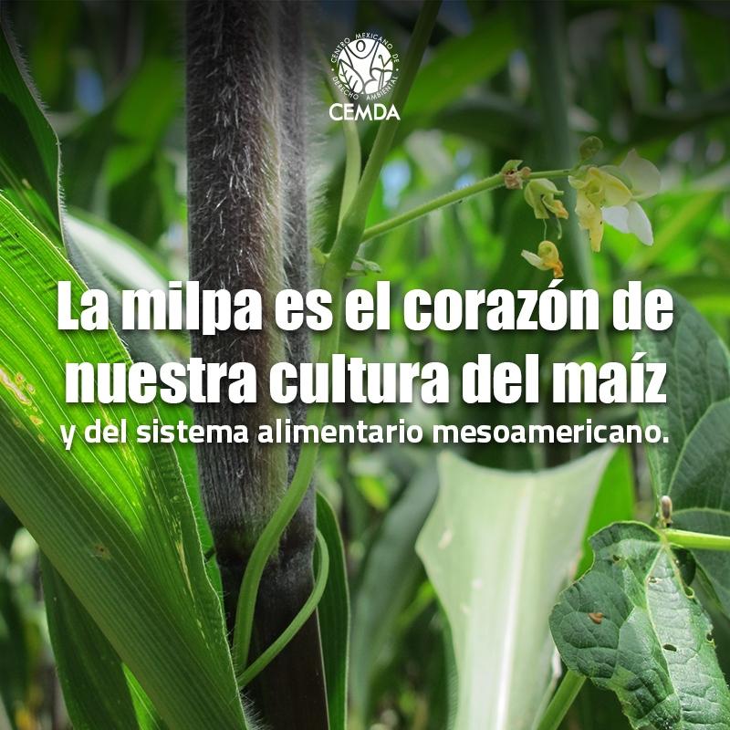 CEM_Artes-maiz-prop-2_001