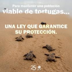 CEM_Tortuga_3