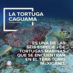Tortuga-1-2018