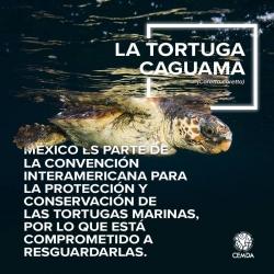 Tortuga-3-2018