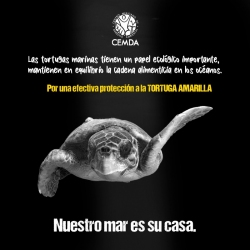 tortugas-2020-1