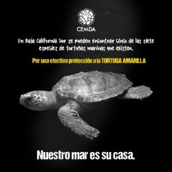 tortugas-2020-2