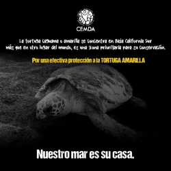 tortugas-2020-3