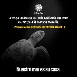 tortugas-2020-4