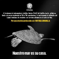 tortugas-2020-5