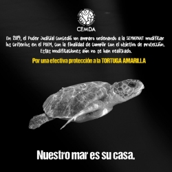 tortugas-2020-6